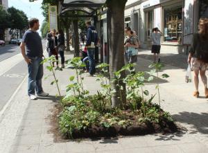 Městské zahrádky. Někdo tu pěstuje slunečnice jen tak pro radost kolemjdoucím